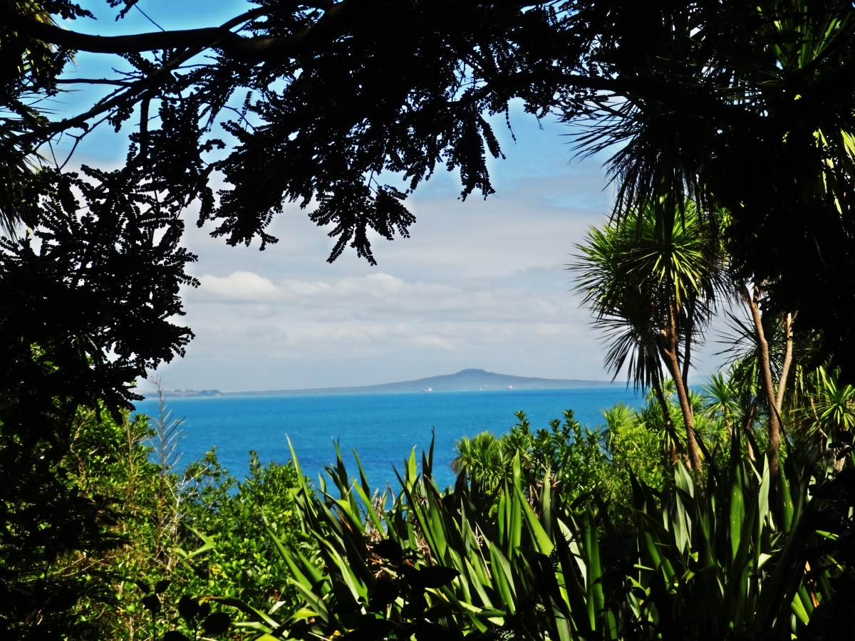 Give the gift of: Tiritiri Matangi