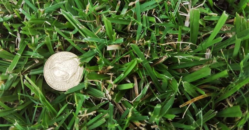 $1-grass